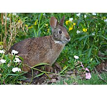 Spring Bunny Photographic Print
