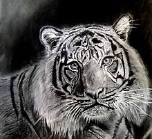 tiger in graphite  by versatileArt