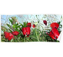 Landscape Close Up Poppies Against Morning Sky Poster