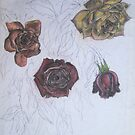 Roses (study) by Thea T
