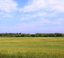Joy is just a windy Kansas wheat field by Karen  Rubeiz