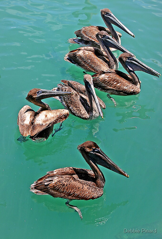 Waiting to be Fed - Key West Florida by Debbie Pinard
