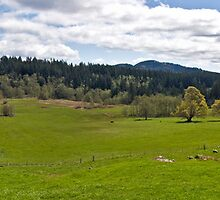 Pastoral View by Bryan Peterson