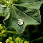 Rain Drop's Keep Falling on my head by CazSteffens