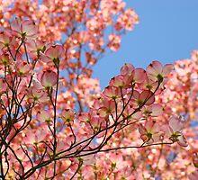 Trees art Pink Dogwood Tree Flowers Blue Sky Baslee Troutman by BasleeArtPrints