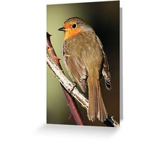 Posing Robin Greeting Card