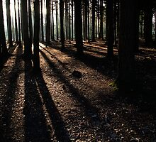 Long shadows by Country  Pursuits