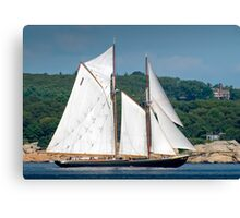 Bluenose II Sail into Gloucester Harbor Canvas Print