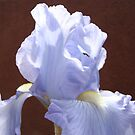 Blue Iris Flowers art prints Irises Garden Baslee Troutman by BasleeArtPrints