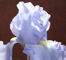 Blue Iris Flowers art prints Irises Garden Baslee Troutman by BasleeArtPrints