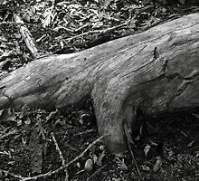 Tree root by Brad Denoon