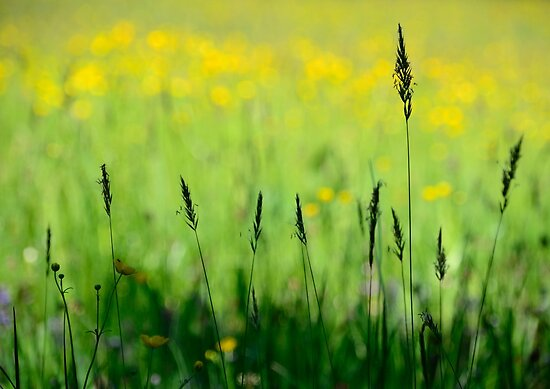 Summer Meadow by Kasia-D