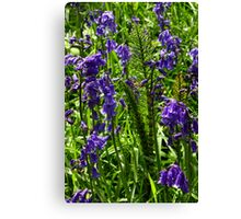 Bluebells and Horsetail Canvas Print