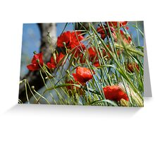 Tuscan poppy(in Tuscany -Italy) Greeting Card