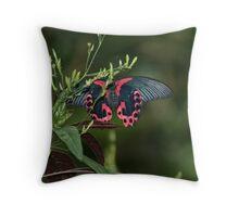 Mormon Butterfly Throw Pillow