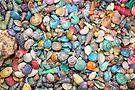 Shells, Shells, Shells by AuntDot