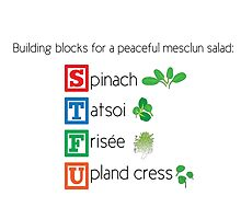Building blocks for a peaceful mesclun salad (salad) by JoyVick
