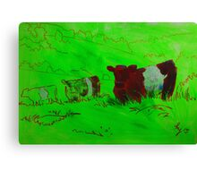 Red Belted galloway cows  Canvas Print