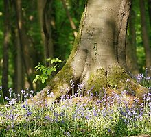 Bluebells around the base of a tree by Martin Carr