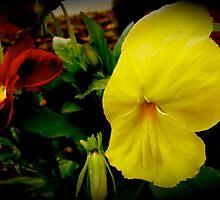 Jamaican Flower by fannonphoto