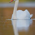 Swan by christopher schlaf