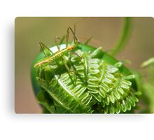 Green Insect on Fiddlehead Canvas Print
