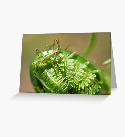 Green Insect on Fiddlehead Greeting Card