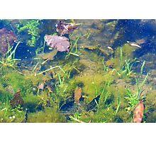 Salamander in My Farm Pond Photographic Print
