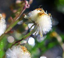 Parachutes for Plants by Jenny Webber