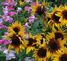 Flower Garden by shutterbugperez