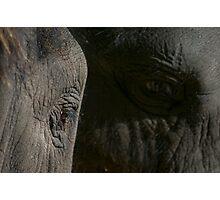 Elephant eyes Photographic Print