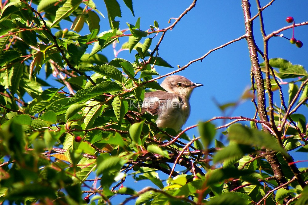 My Little Mockingbird Friend by Kate Eller