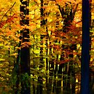 """Driveby Shooting No.14 - Goldenwoods by Christine """"Xine"""" Segalas"""