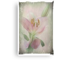 A Lily is Humble Canvas Print