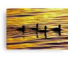 golden sunset lit water with ducks Canvas Print
