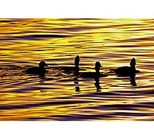 golden sunset lit water with ducks Photographic Print
