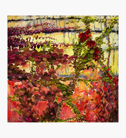 """Garden Wall"" Photographic Print"