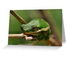 American Green Tree Frog Greeting Card