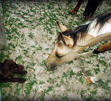 Coco Makes a Friend by Jennifer Rhoades