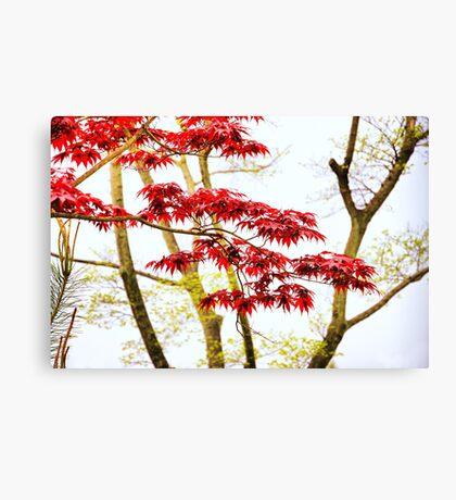 Asian Motif Canvas Print