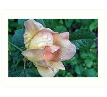 Drenched Rose Art Print