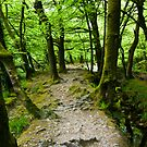 Path to Golitha Falls by David Wilkins