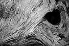 Scowl by Leon Heyns