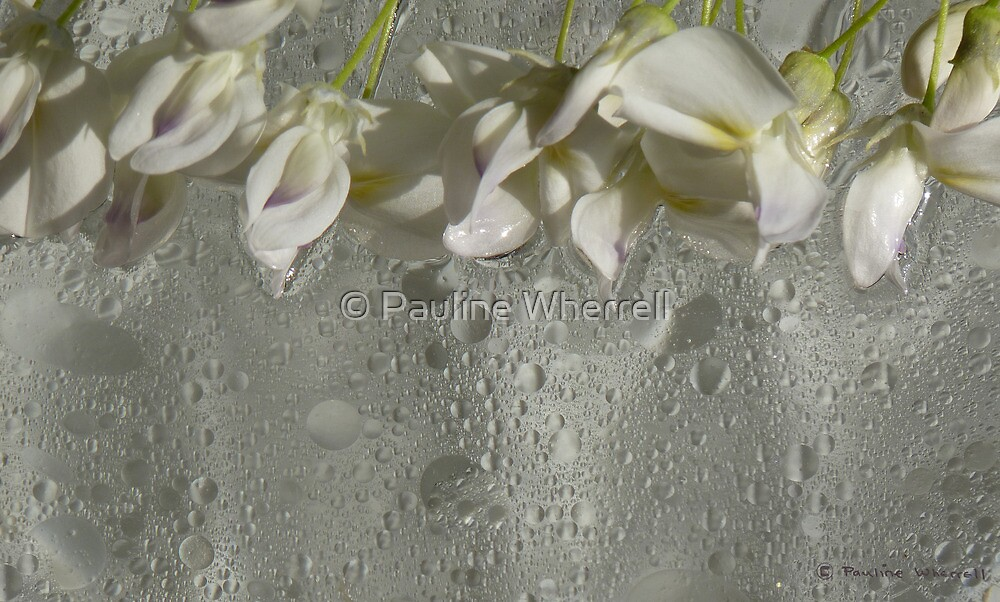 The beauty of white by © Pauline Wherrell