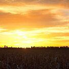 Good Morning Sunshine - Chinchilla Qld by Beth  Wode