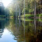 Moments of Reflection - Maroochy Bushland Botanic Gardens, Tanawha, QLD, Australia. by Martin Lom