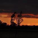 Sunset Silhouette by Larissa Kerkow