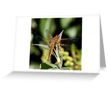 scarce chaser Greeting Card