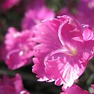 Blossom Send Some Sunshine Down My Way by Hank Eder