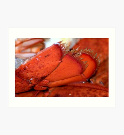 What am I?~*Lobster Tails*~...Solved by jules572  Congratulations.. Art Print